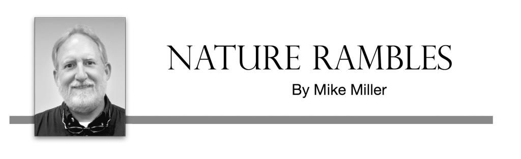 NatureRambles header 4