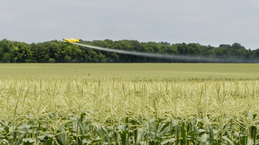 A crop duster loops low over a cornfield south of Henry in early July spraying pesticides. Because of constant rain, farmers are applying more fungicides than normal. The rain also means fields are often too wet for ground equipment so pesticides normally applied by ground sprayers are being applied aerially. Pesticide drift occurs more often with aerial applications compared with ground applications.         Photo by Clare Howard