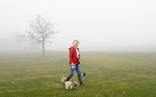 PHOTO BY CLARE HOWARD Kim Crandall, who has expressed concern about the growing number of friends and neighbors in her Morton community diagnosed with cancer, walks her pomeranian-poodle mix dogs near a cornfield in an early morning fog.  Many agricultural and lawn care chemicals drift from the sites where they are applied and can volatilize and spread in fog and rain.