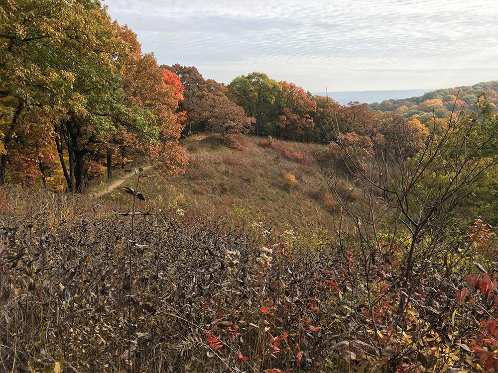 Hill Prairie