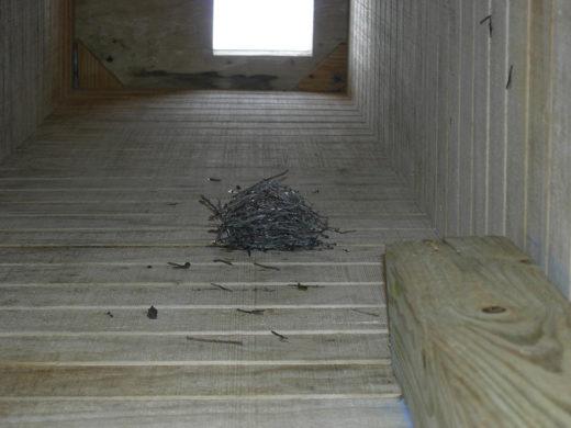 Chimney Swift nest