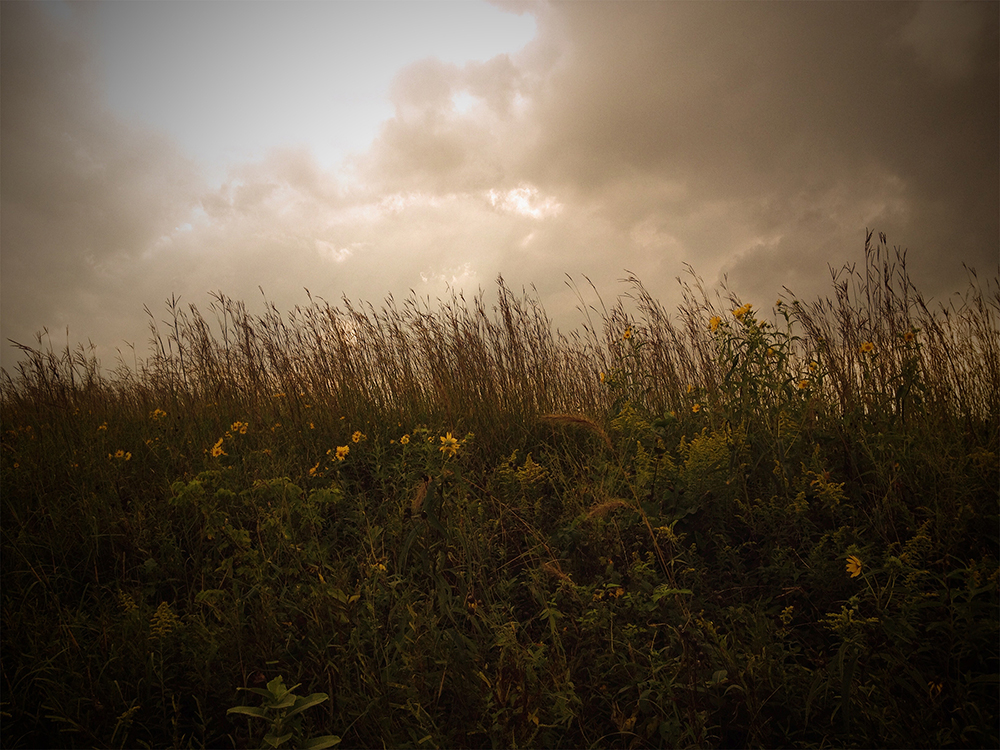 Brimfield Railroad Prairie Nature Preserve